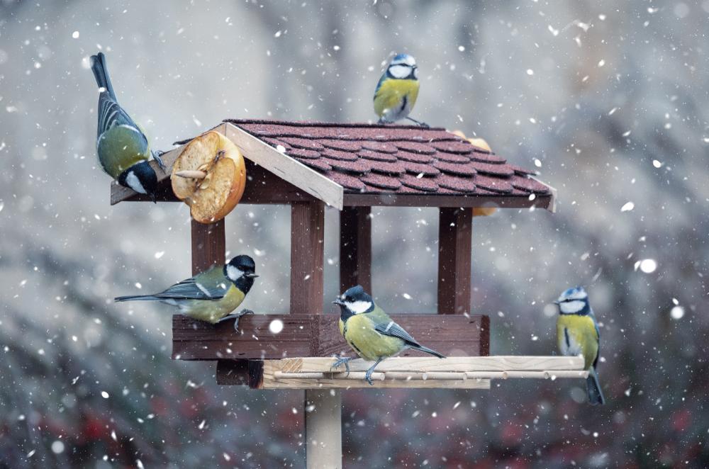 Ptačí hodinka v Radimi